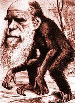 Darwin Chimp